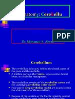 Brain Anatomy: Cerebellum