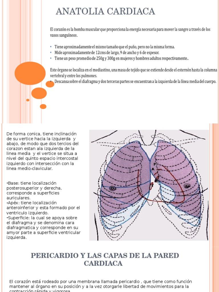 Anatomia cardiaca.ppt