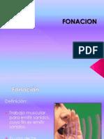 Anatomia 1 Fonoaudiologia