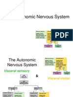 Lecture 15 - Autonomic Nervous System