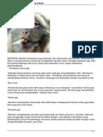 Efek Buruk Merokok Untuk Gigi a Mulut