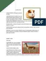 Animales Nativos y Del Peru
