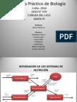 biologia maricel1