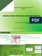 meninges-140318165912-phpapp01