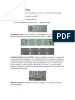 Resumen d e Embriología