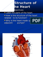 the Structure of the Heart[1]