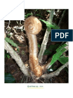 Especies de Flora Donmatias Medellín