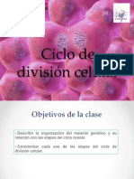 Ciclo de División Celular
