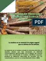 Anatomia de Pinaceas y Su Relacion Con La Humedad