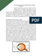 Anatomía y Estructura de Los Cinco Sentidos Del Cuerpo Humano