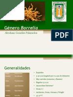 Género Borrelia