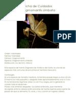 Ficha de Cuidados Stagmomantis Limbata