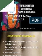 Anatomia Semana 14a
