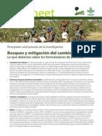 Bosques y mitigación del cambio climático