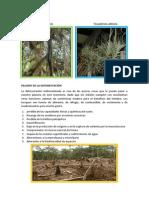 PELIGRO DE LA DEFORESTACION.pdf
