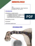 Temas 4-8.- DESARROLLO EMBRIONARIO.ppt