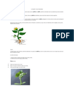 La Planta y Sus Funciones