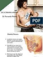 Glandula Mamaria Clase