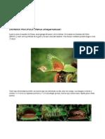 Manual Dionaea