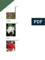 Flores y Su Significado