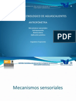 Antropometria Biomecanica Mecanismos Sensoriales
