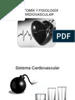 Anatomia Fisiologia Cardiovascular ETognarelli