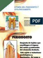 Macroanatomia Del Periodonto y Histologicamente - EXPOSICIÓN MACROANATOMÍA DEL PERIODONTO
