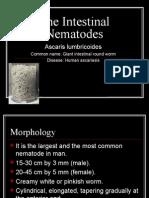 The Intestinal Nematodes