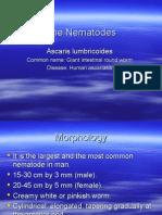 The Nematodes