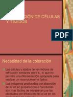 Coloracion de Celulas y Tejidos