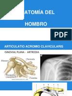 Hombro Anatomia