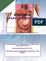 Anatomia Del Aparato Digestivo II