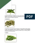 plantas medicinales  15