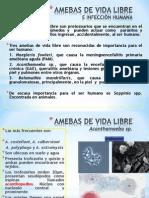 Amebas de Vida Libre - 604