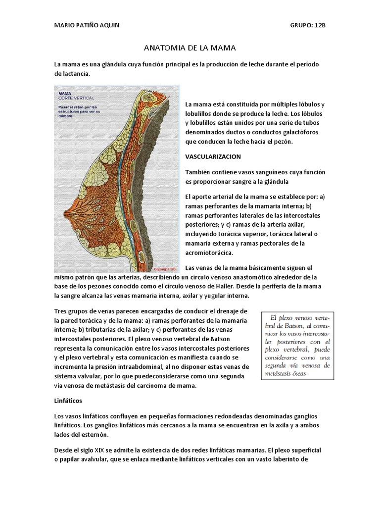 Magnífico Anatomía Venosa Torácica Ornamento - Anatomía de Las ...