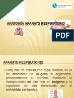 anatoma aparato respiratorio udelas