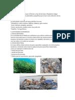 Flora y Fauna Peruana