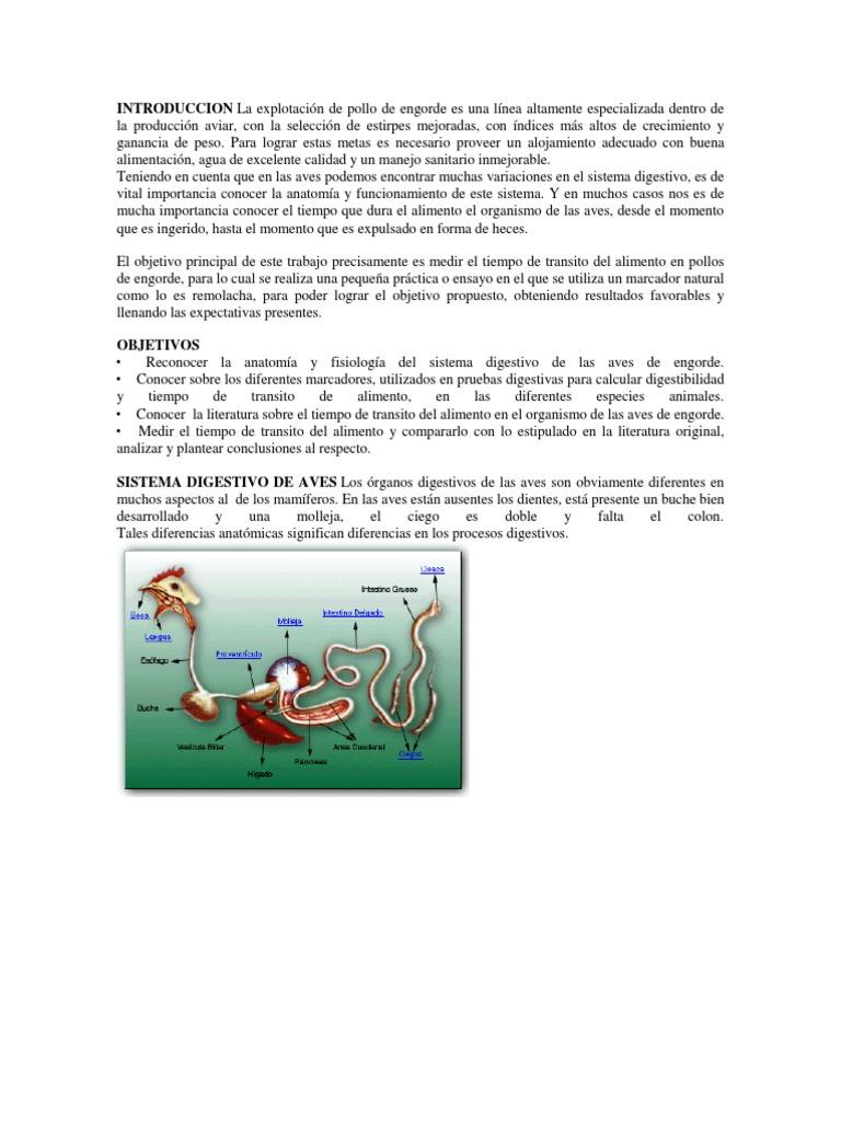 Asombroso Prueba De Anatomía Y Fisiología Elaboración - Imágenes de ...