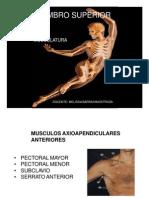 Insercion de Musculos