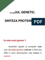 Codul Genetic , Sinteza Proteinelor