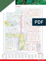 Metabolic Pathways Poster