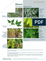 Neophyten Bestimmungshilfe.pdf