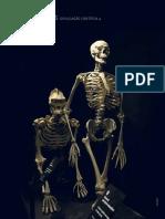 Do Macaco Ao Homem Exposição Permanente No Catavento Cultural SP