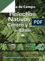 Helechos Nativos Centro Sur Chile
