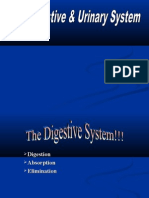 Digestive System Powerpoint.ppt