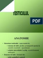 Curs Testicul