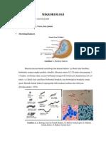 Resume Morfologi Bakteri, Jamur, Virus