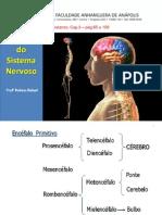 3Aula Fisiologia Sistema Nervoso Central