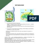 Metabolisme Print