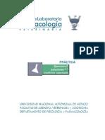 solucionesmedicinavet-130925140001-phpapp02